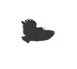 rheged bird cutout2 copy